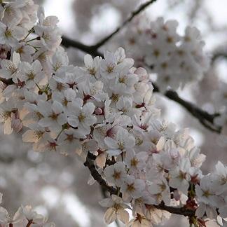 Le Clos des Cerisiers